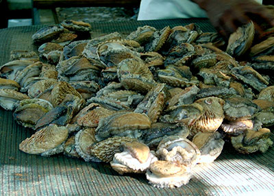 Abalone, appearing in Africa PORTS & SHIPS maritime news