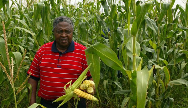 BEE farmer and his maize crop, featured in Africa PORTS & SHIPS maritime news
