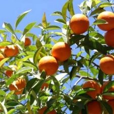 Citrus fruit for export, featured in report in Africa PORTS & SHIPS