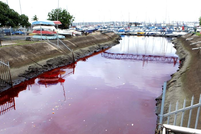 The tongue-in-cheek-named Lavender Creek which is a drain leading from Durban's CBD, does not only discharge sewage into Durban Bay but at time other matter. On this occasion a few years ago it was an unknown substance that turned the area near the Durban Marine into a blood-red colour. Featured in Africa PORTS & SHIPS maritime news online