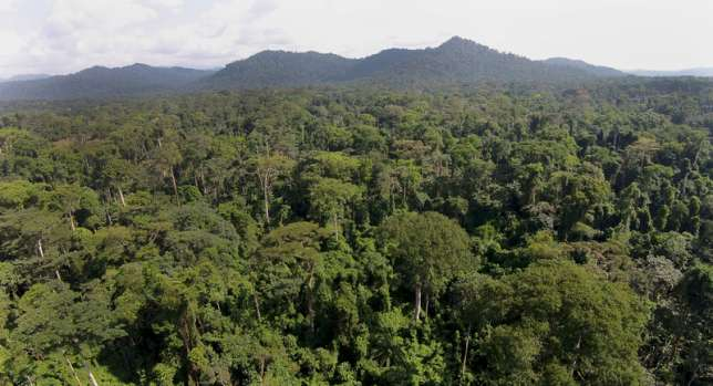 African forest scene. Picture courtesy: Greenpeace, featured in Africa PORTS & SHIPS maritime news