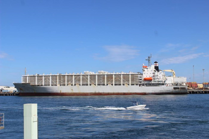 Livestock carrier Al-Shuwaikh. Picture: Farm Weekly, featured in Africa PORTS & SHIPS maritime news