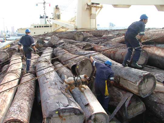 Searching for stowaways on board a ship loaded with logs, note the dog used to search hard-to-get-at places, featured in Africa PORTS & SHIPS