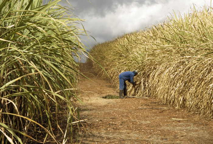 Sugar farming in Kenya featured in Africa PORTS & SHIPS maritime news