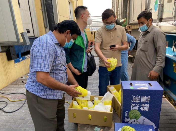 Preparing the custard apples for export from Taiwan to Dubai, as featured in rreport in Africa PORTS & SHIPS maritime news